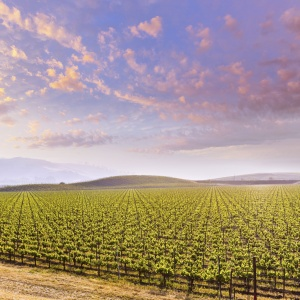 Vineyard_000052916260_Double